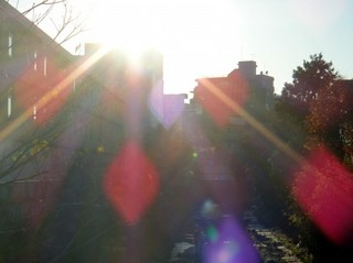 日差しが強い